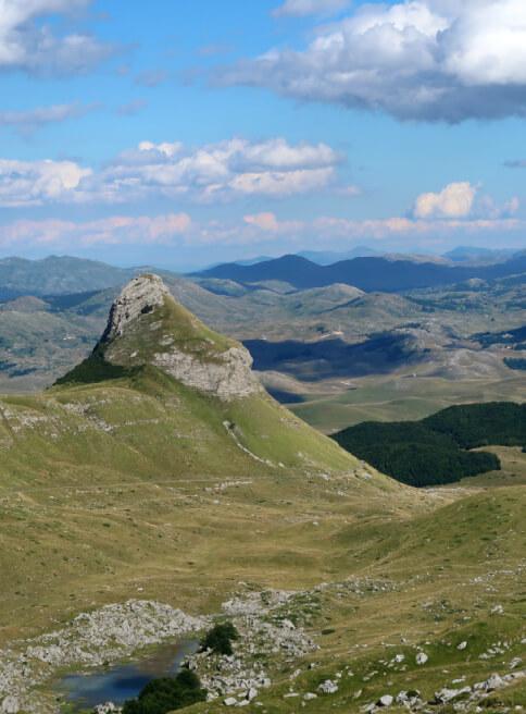 Discover new species of Montenegro