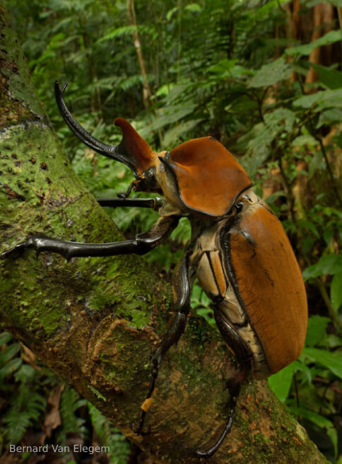 Discover new species of Panama